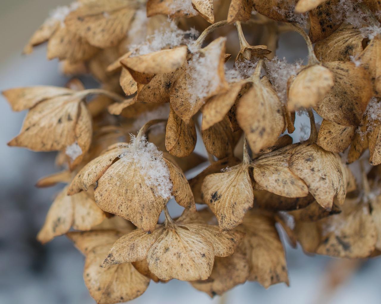 Погода в Казахстане: в Алматы и Нур-Султане ожидается снег