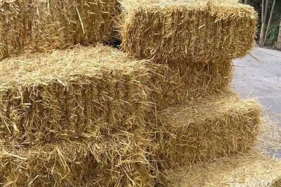 Фермеры Карагандинской области начали заготавливать корма на зиму