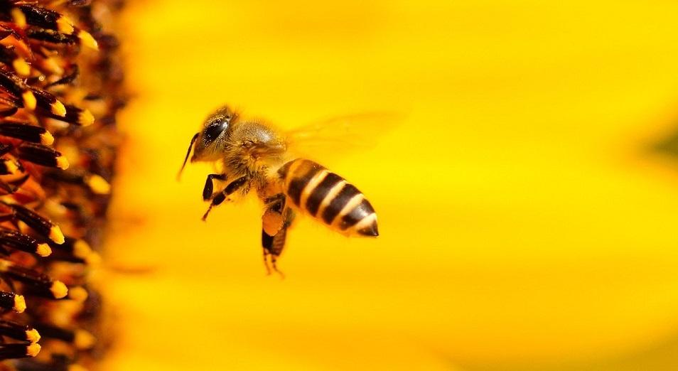 Пчеловоды ВКО наладили экспорт меда через интернет-магазин Аlibaba