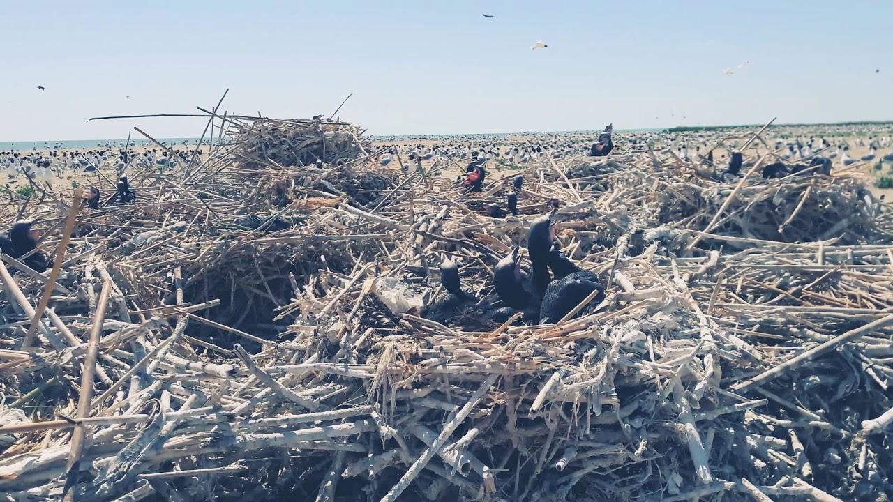 Мертвых птиц обнаружили в атырауском государственном природном резервате «Ак Жайык»