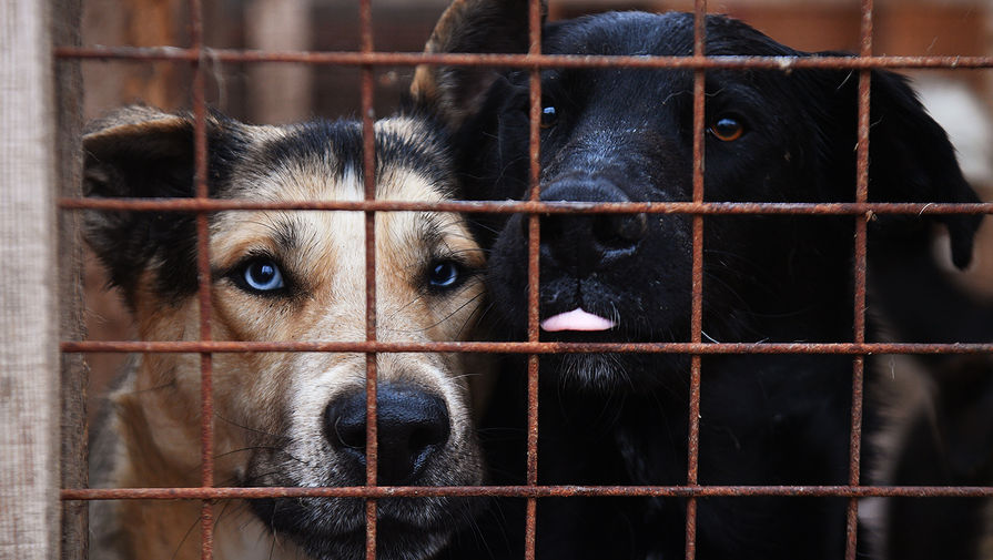 Зоозащитники узнали женщину, помогавшую живодеру разделать собаку в Петропавловске