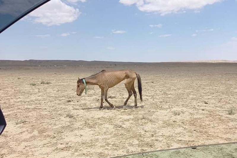 Эколог: Засуха в Мангистауской области ждет и южные регионы Казахстана