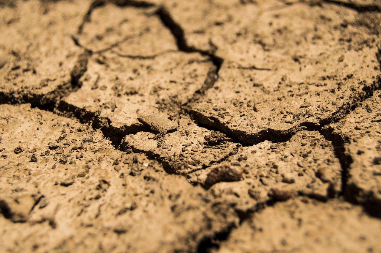 «Интервью»: засуха и падеж скота: кто виноват и что делать?