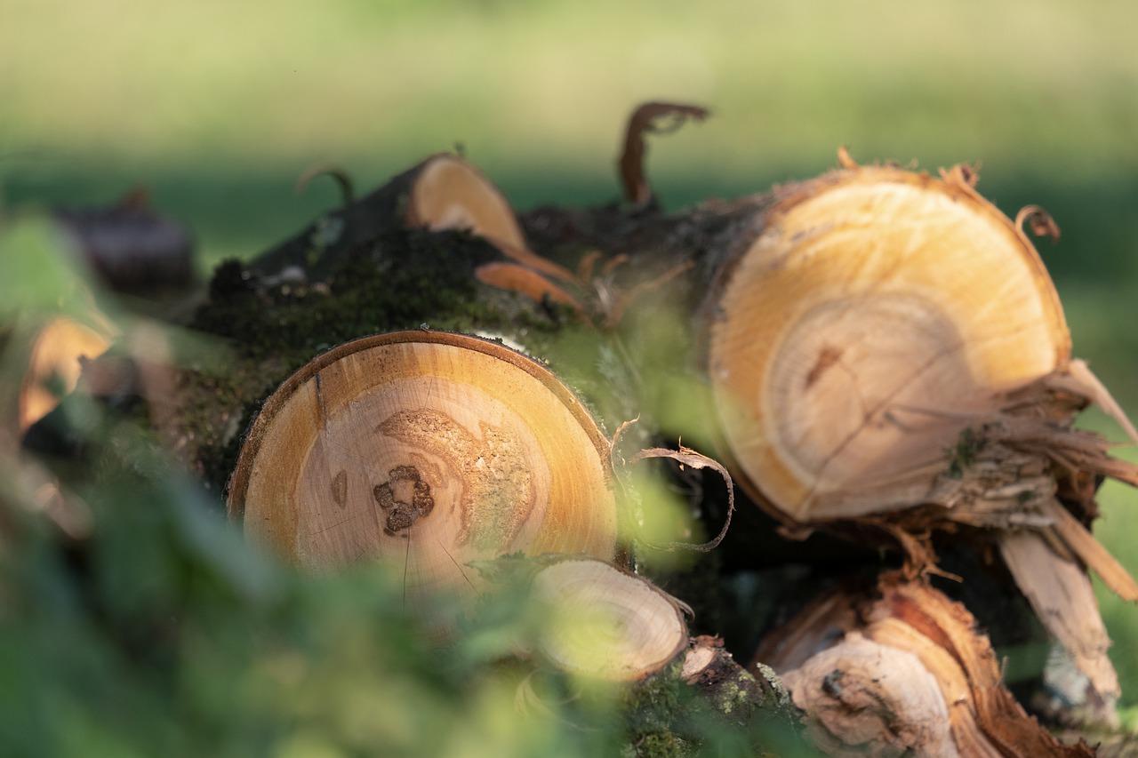На одной из улиц Семея произвели незаконную вырубку деревьев