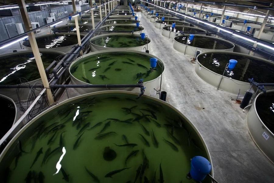 В Карагандинской области в 2021 году планируют увеличить субсидии на рыбоводство