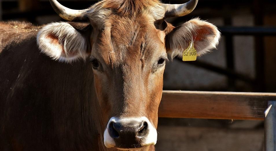 Рынок на миллиард: минсельхоз намерен отменить международные стандарты?