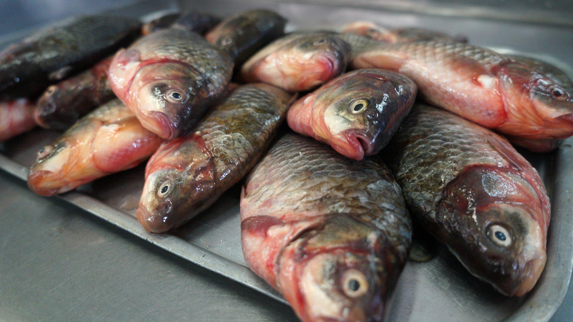 В Казахстане планируется выращивать порядка 270 тысяч тонн товарной рыбы в год