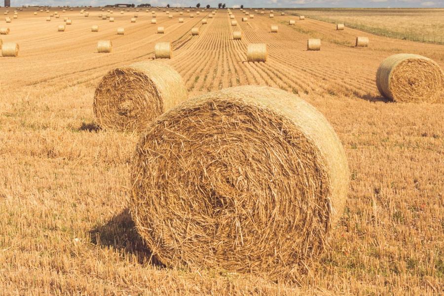 АЗРК проверяет обоснованность роста цен на корма