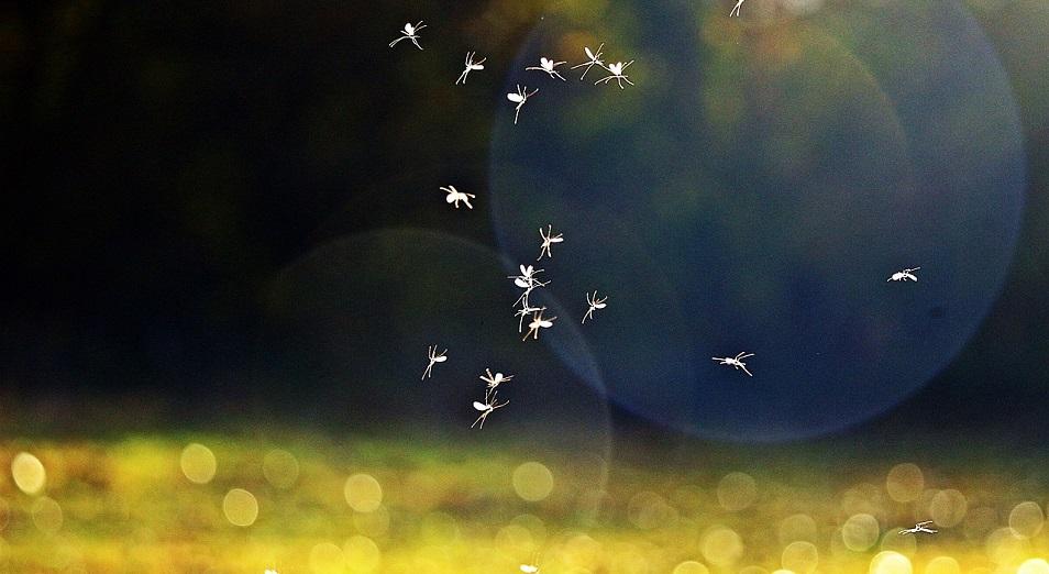 Восточноказахстанцы страдают от нашествия комаров