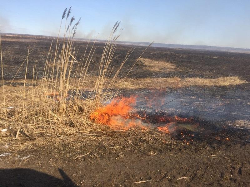 Десять природных пожаров ликвидированы за сутки в ВКО и Карагандинской области