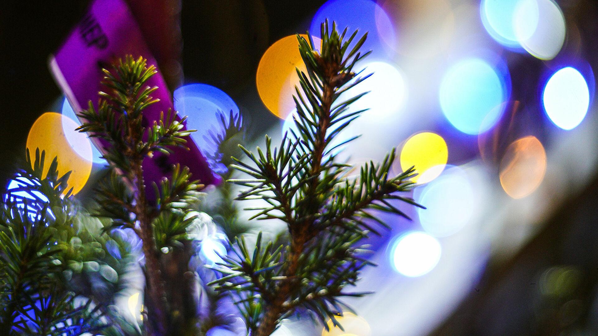 Биоелка – новогодний  тренд в Германии