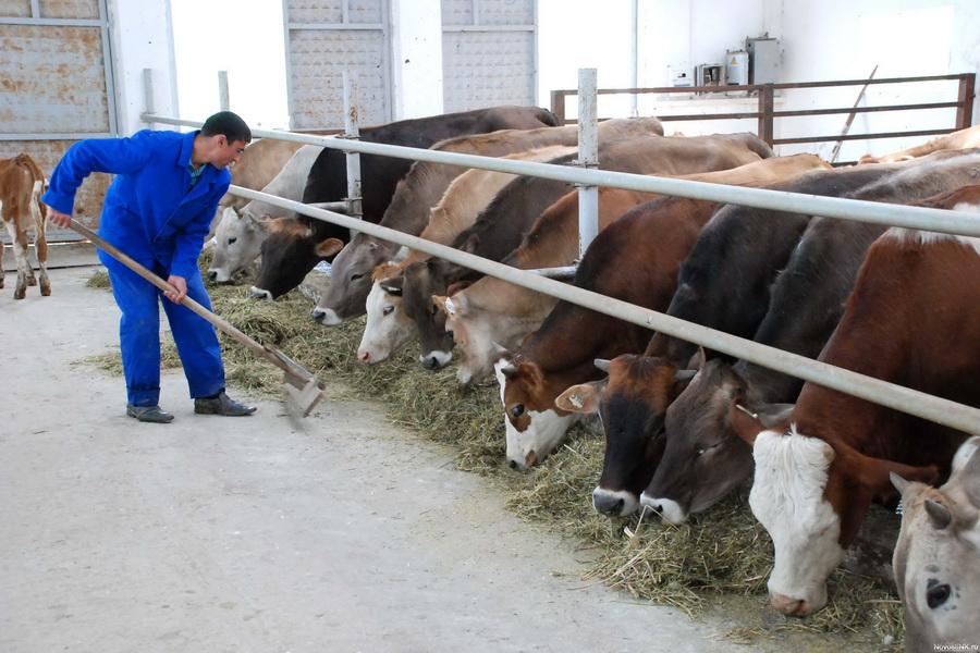В Казахстане может появиться День животноводов