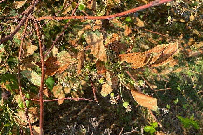 Министерство экологии назначило проверку по факту пожелтевших деревьев