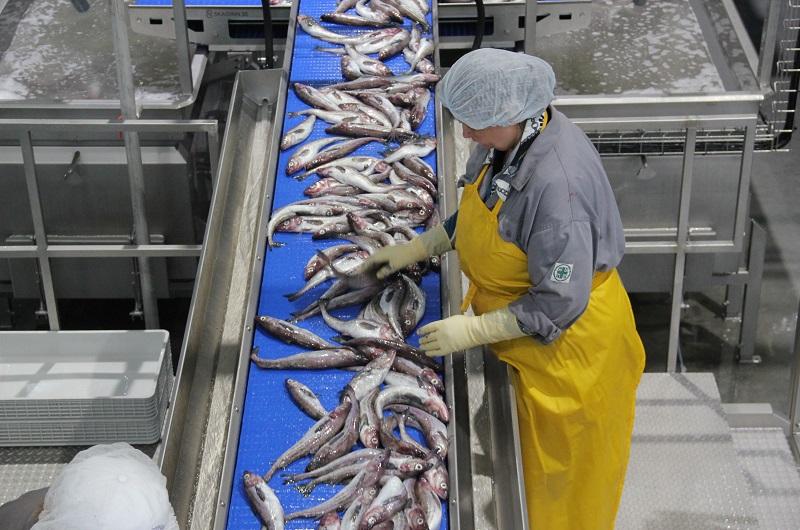 Минэкологии предлагает построить пять рыбных заводов