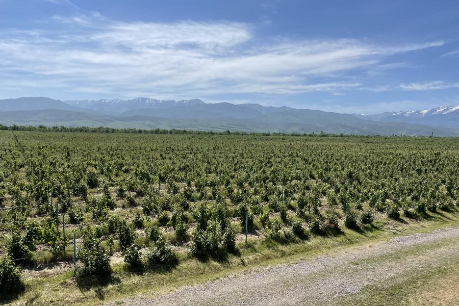 Казахстанское вино будут экспортировать в ЕС, США и Японию