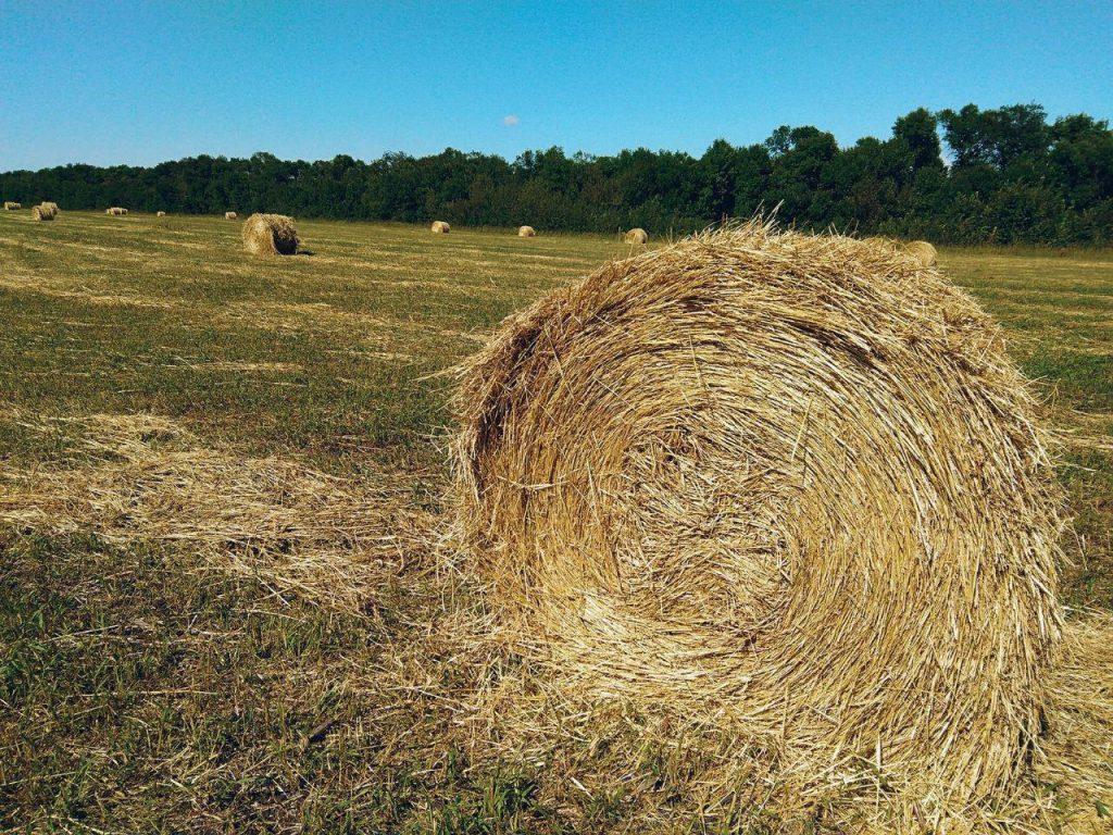 Карагандинские фермеры отправили сено в соседние регионы