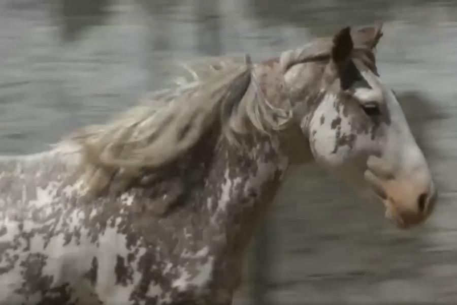 Смарт-ошейники для борьбы со скотокрадством тестируют в Алматинской области