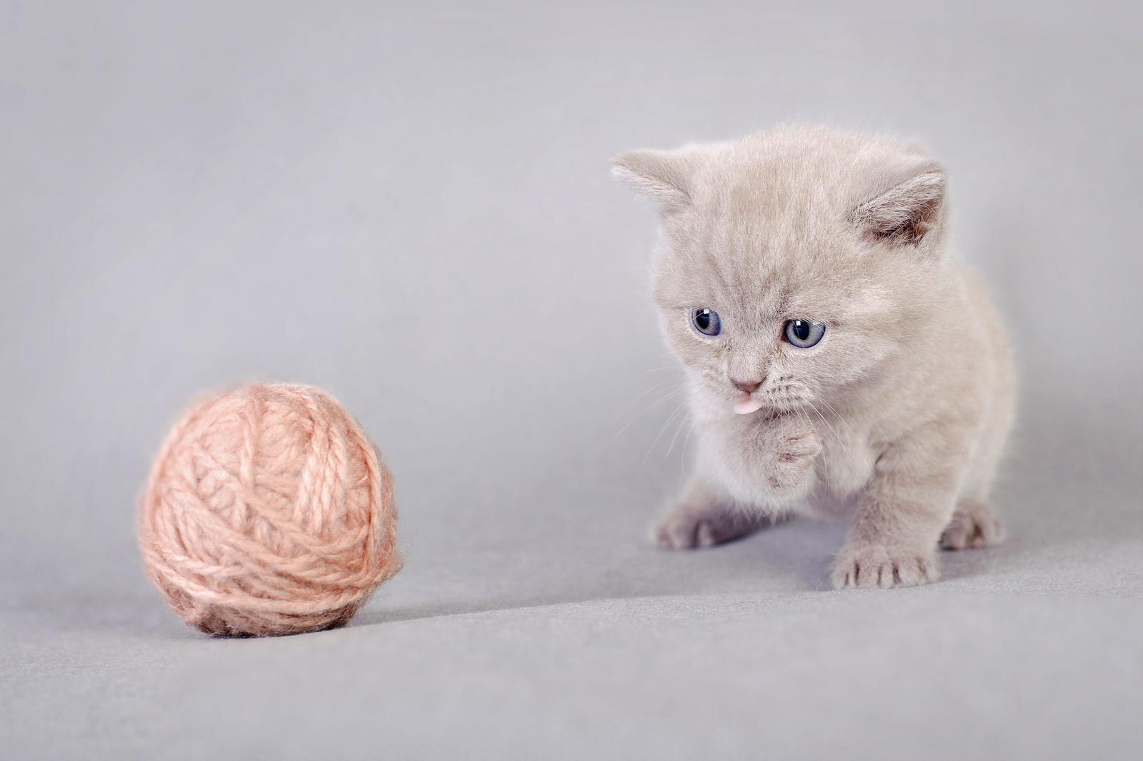 Как казахстанский «любитель» кошек обманул доверчивую пенсионерку из России