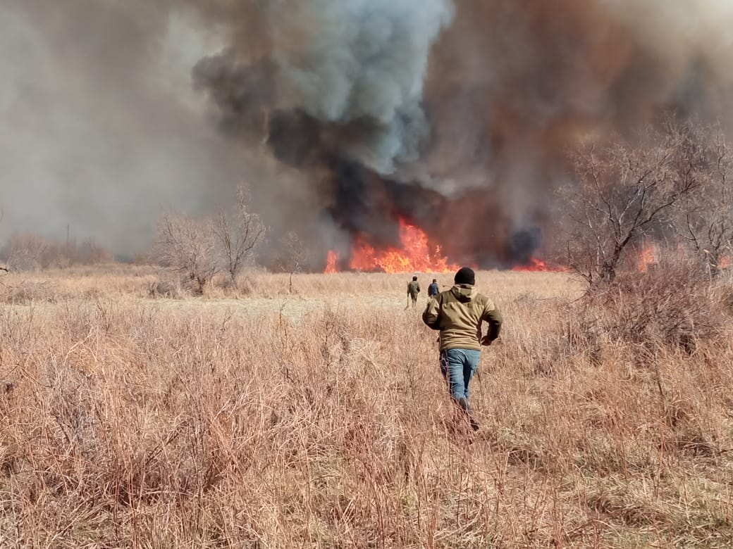 В Алматинской области произошли два лесных пожара