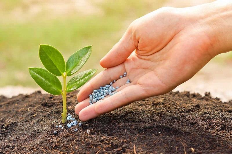 Производство азотных удобрений в РК выросло на четверть, фосфорных – на 8%