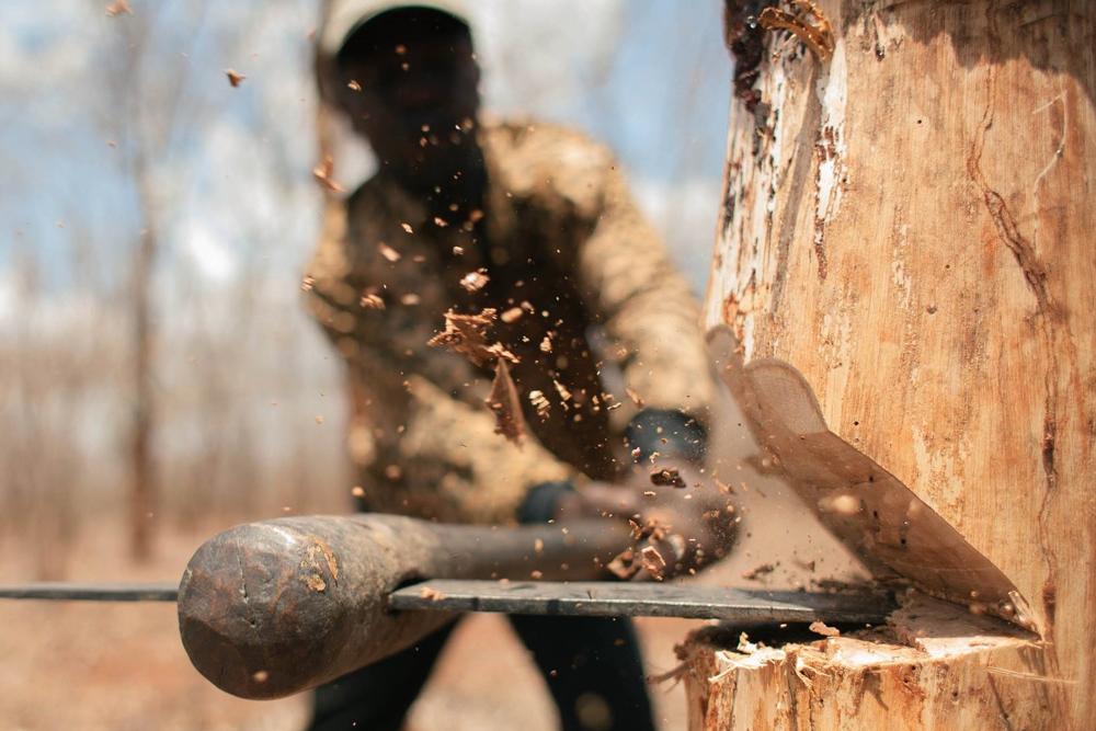 Из-за олова в СКО 45 га леса пойдет под топор