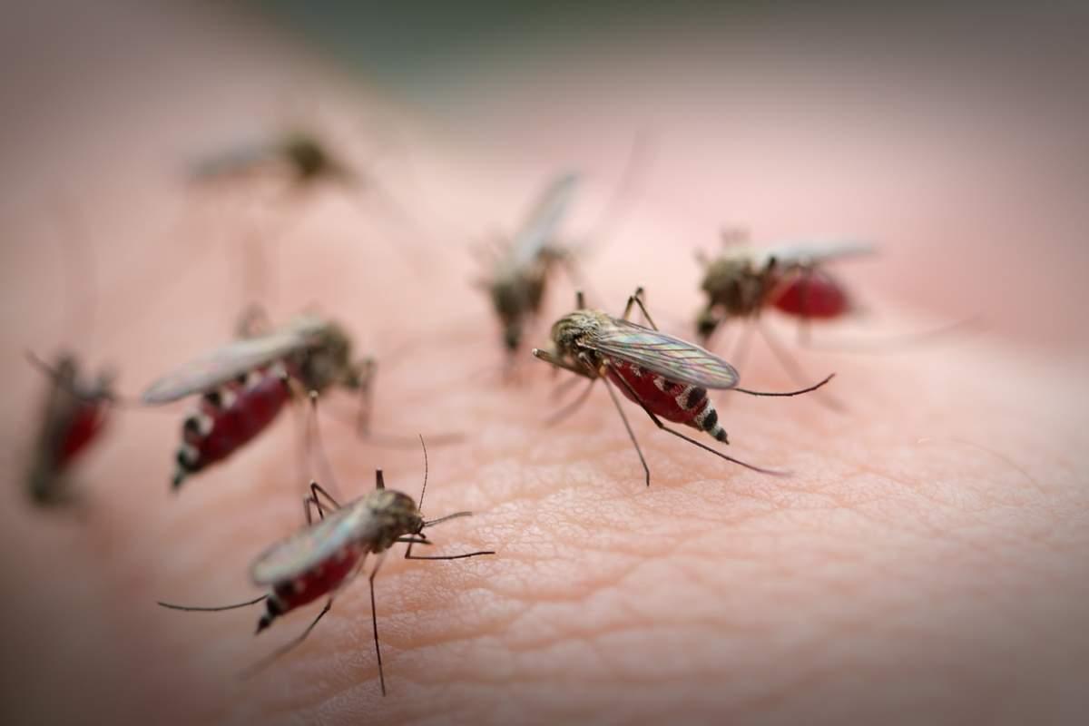 На нашествие комаров жалуются жители Атырау
