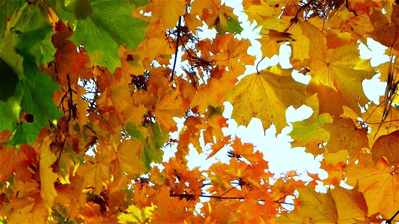 Почему пожелтели листья на деревьях в промышленной зоне Усть-Каменогорска
