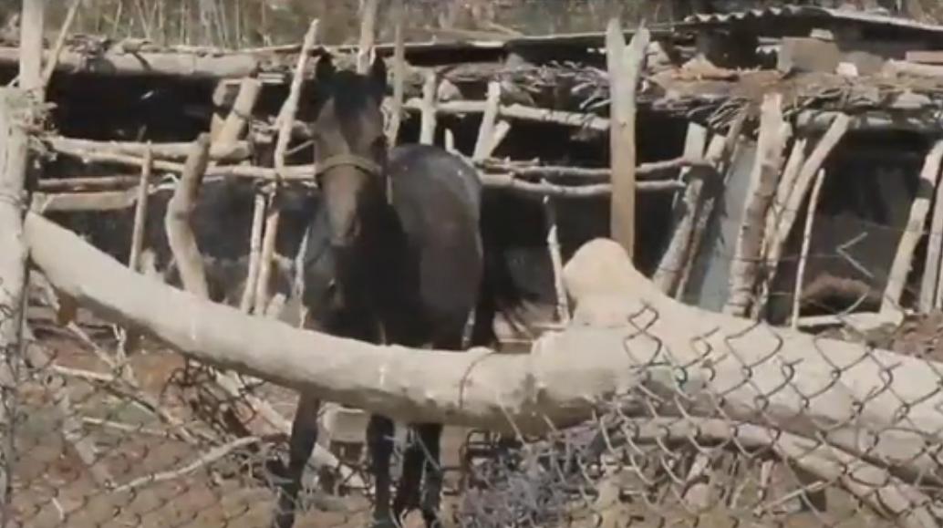 Отрезанные от цивилизации: 11 семей «застряли» в новом районе Кызылорды
