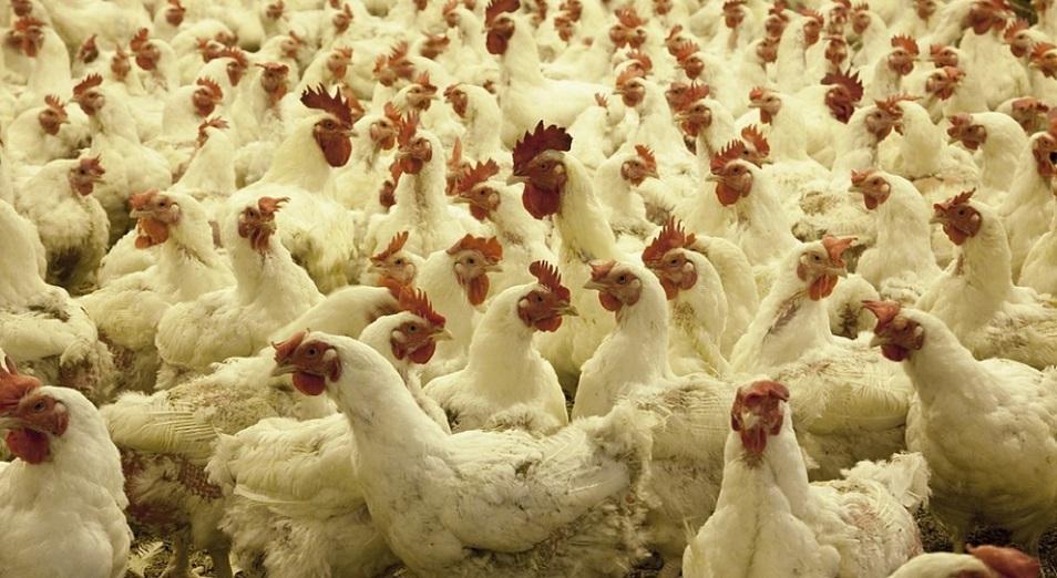«Комсомольскую птицефабрику» запустят под другим брендом