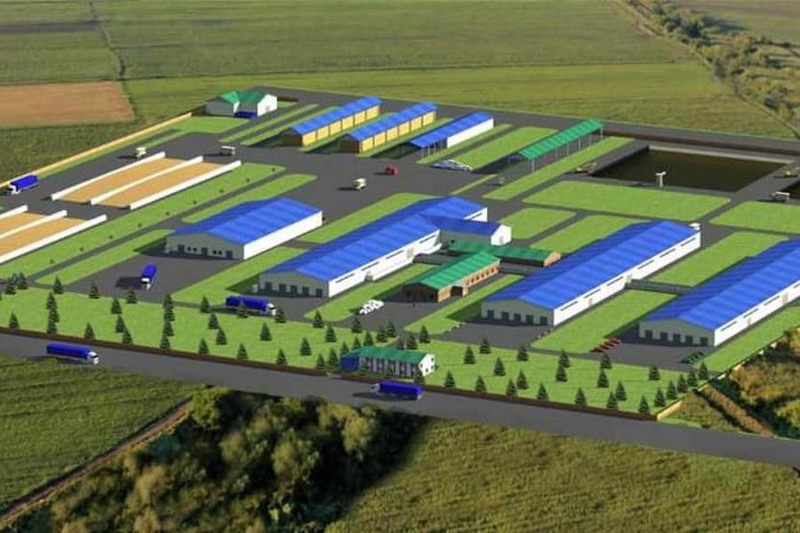 Молочную ферму на 1200 голов планируют запустить в Туркестанской области