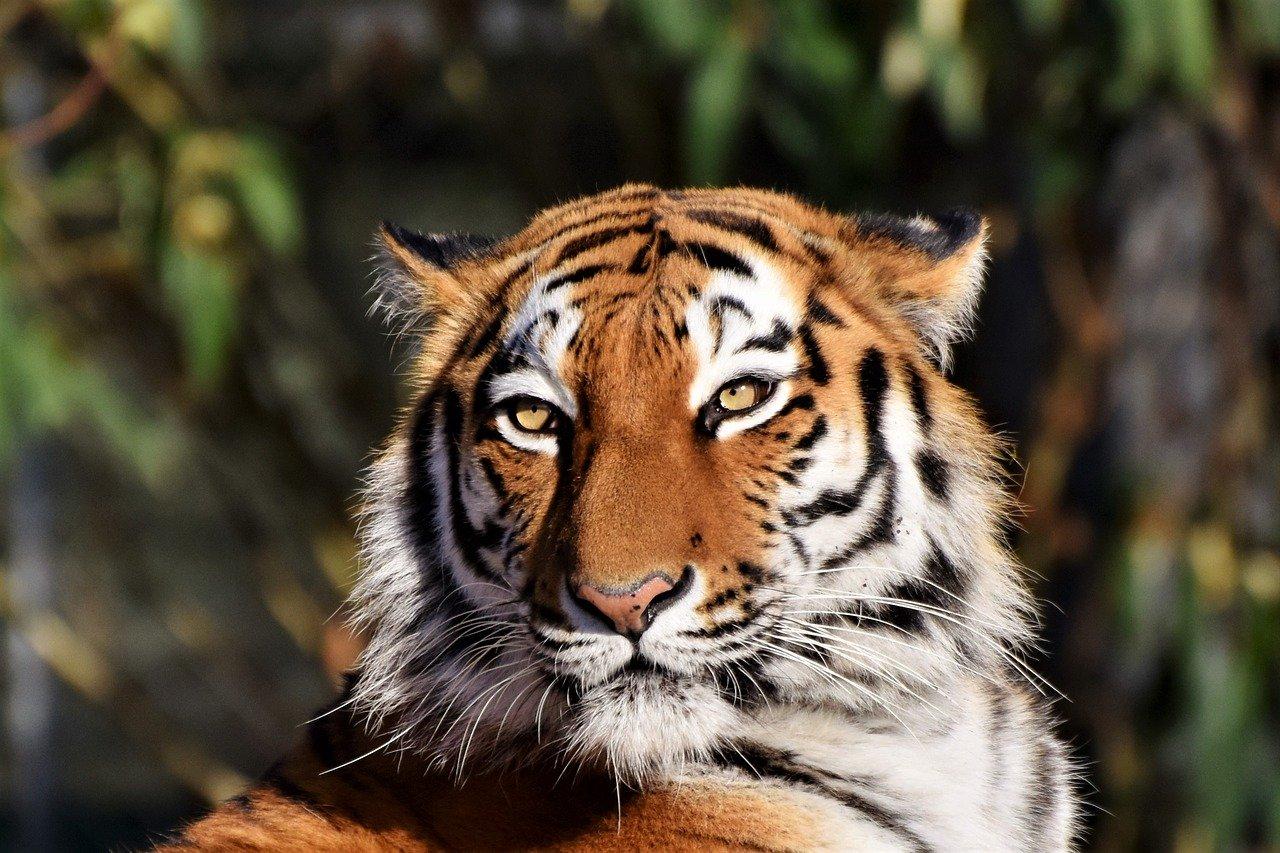 Каких животных запретили вывозить из стран ЕАЭС