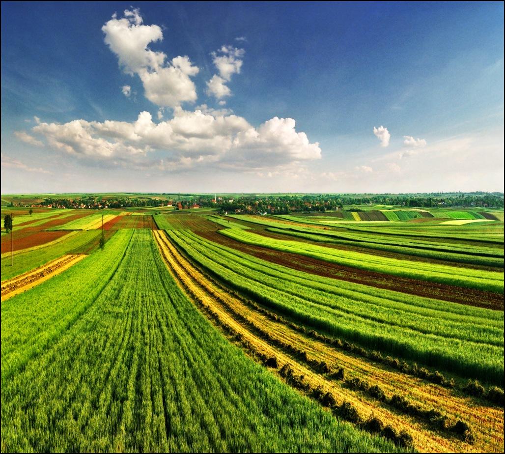 Законопроект, запрещающий предоставление сельхозземли иностранцам, направлен на подпись президенту