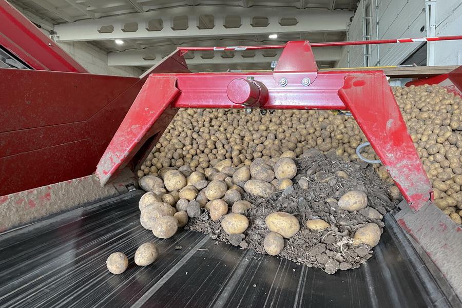 Когда Казахстан начнет экспортировать семена картофеля