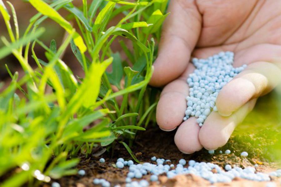 Всероссийский НИИ агрохимии высоко оценил качество казахстанских удобрений