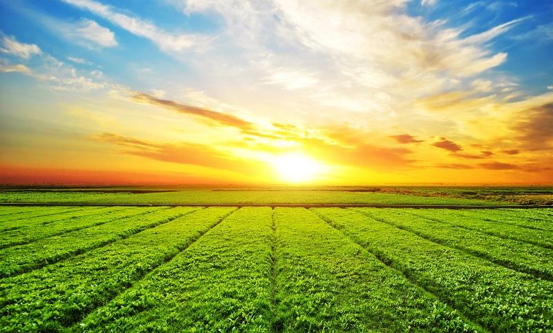 За полгода в госсобственность в Павлодарской области вернули 92 000 гектаров земли