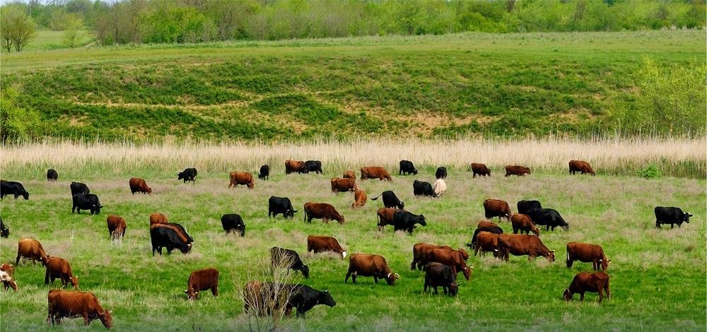 В Казахстане выросло сельхозпроизводство