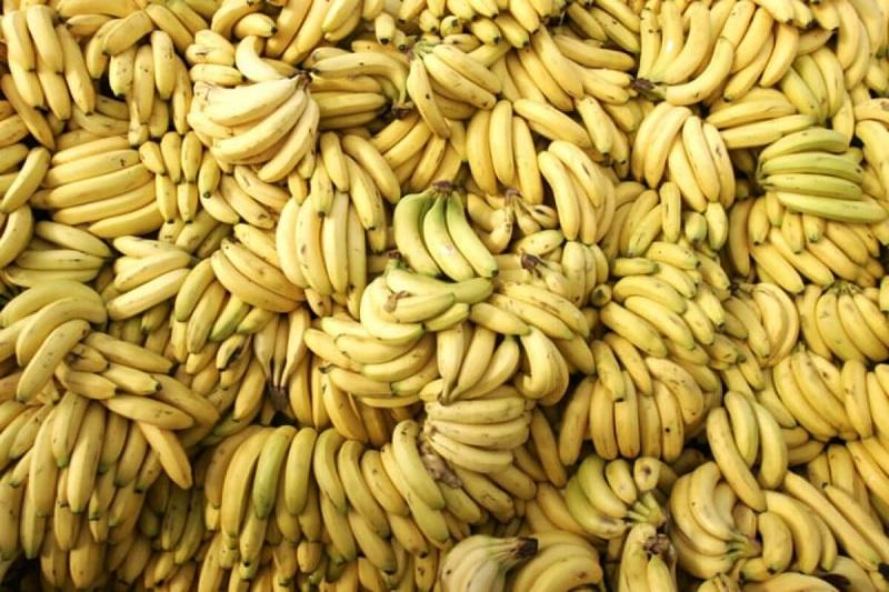 Более 175 тонн растительной продукции высокого фитосанитарного риска не пустили в РК