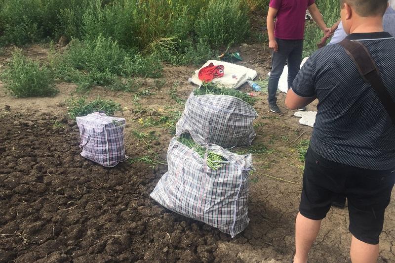 У жителя Шымкента нашли 95 грамм героина