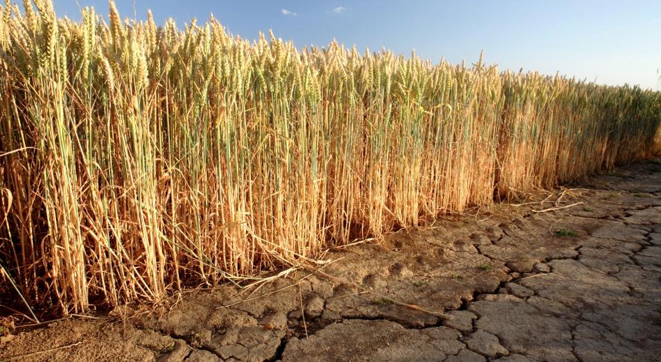 Экстремальная засуха в РК: цены на корма взлетели, фермеры на юге и западе на грани разорения