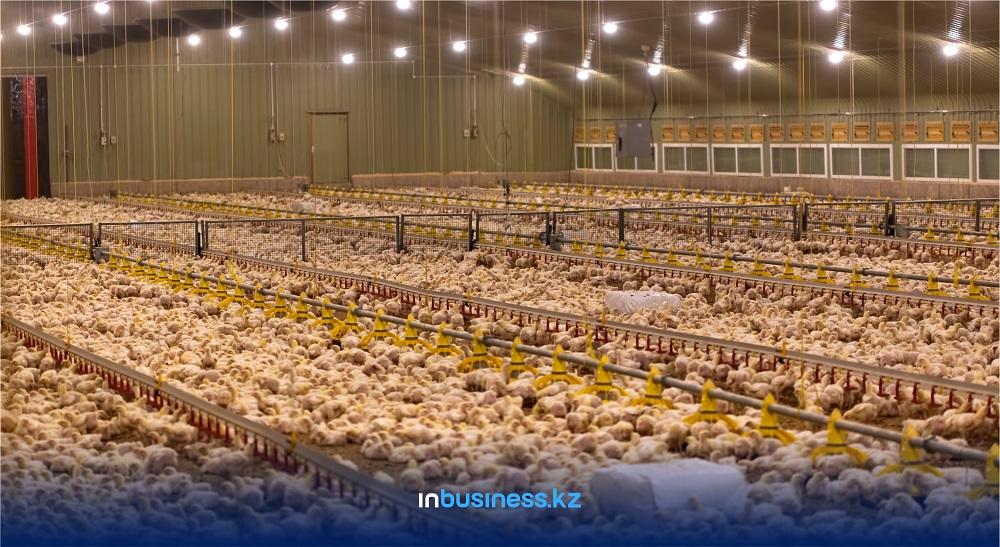 Падеж от птичьего гриппа составил 1,9% от всего поголовья в Казахстане