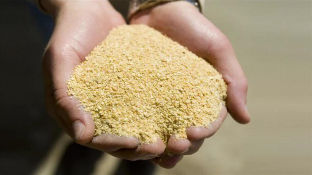Россия не пропустила в Казахстан корма с ГМО