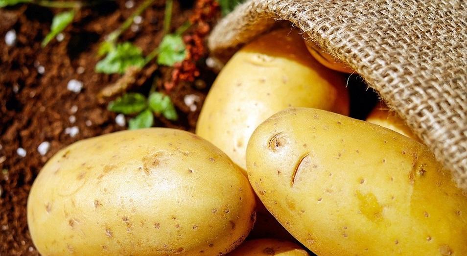 Глава минсельхоза: Картофель со склада уходит по 200 тенге за килограмм