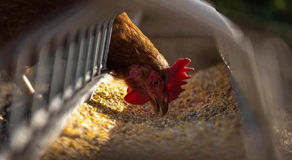 Птицефабрики просят помочь им с кормами