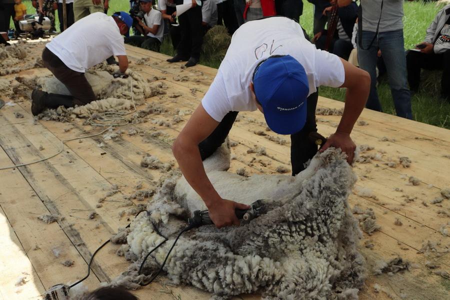 В Казахстане провели конкурс овцеводов