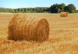 О заготовке сена и кормов в Мангистауской области
