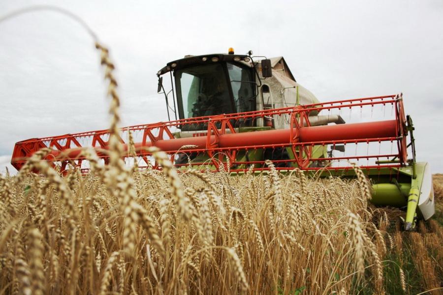 В Казахстане намолочено 16,1 млн тонн зерна
