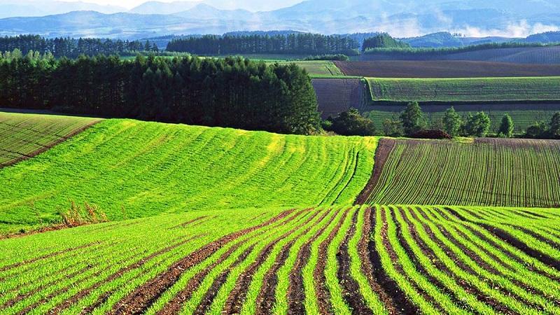 Переселенцам на север поручено выдавать земли для сельхоздеятельности