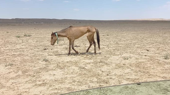 В Аральском районе, где из-за засухи погибли более 500 голов скота, объявлен режим ЧС