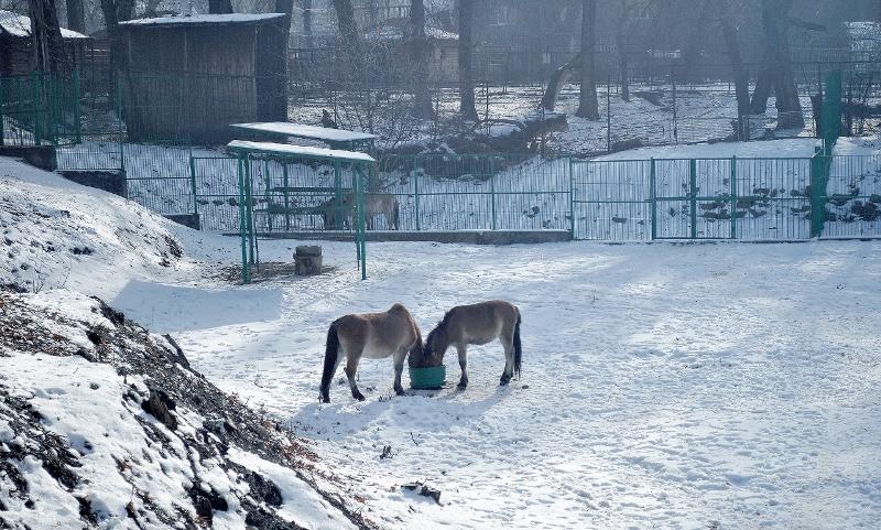 Мюнхеннен әкелінген құландар төлдей бастады, Алтынемел ұлттық табиғи паркі, құлан, Пржевальский жылқысы