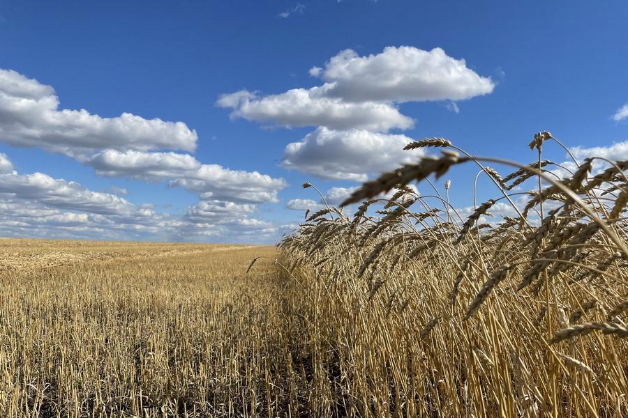 Пик цен на пшеницу ожидается весной